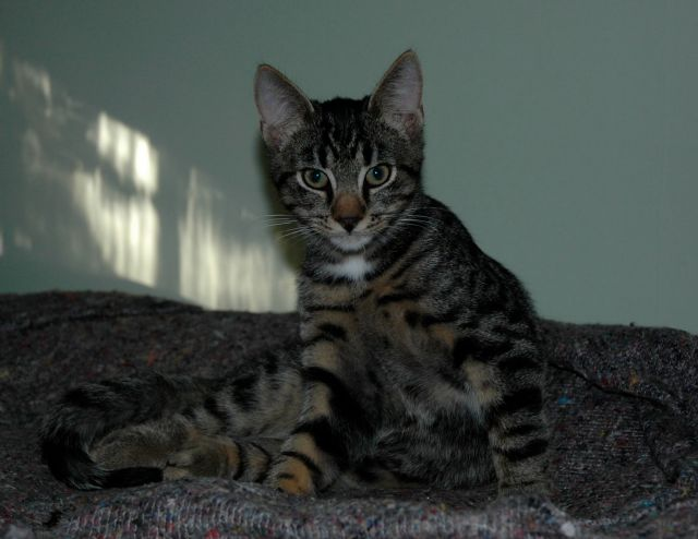 A portrait of Moses as a young cat