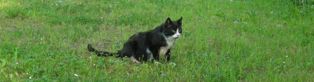 Tottafaren sitter i gräset