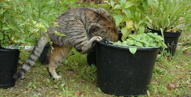 Muffin som trädgårdsassistent