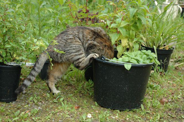 Muffin hjälper till med plantorna