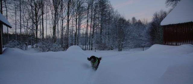 Tage springer i snö