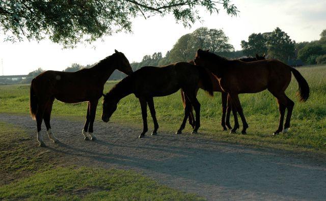 Hästar vid Höije å