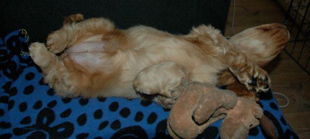 tyra sover
