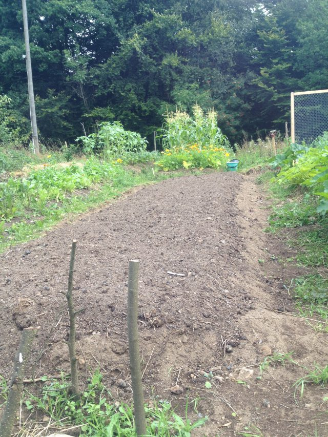 Odlingsbädd med tillförd kompost